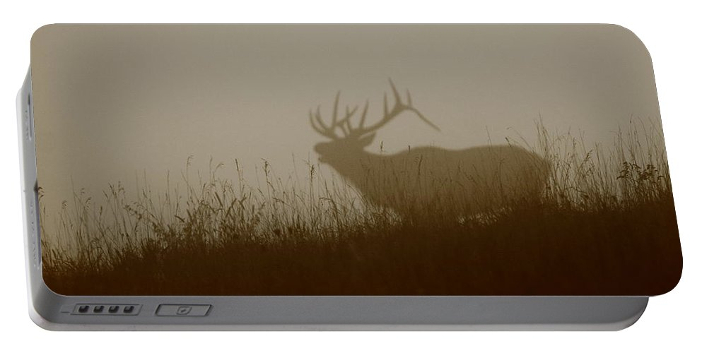 Elk Portable Battery Charger featuring the photograph Phantom Of The Glen by Bruce J Robinson