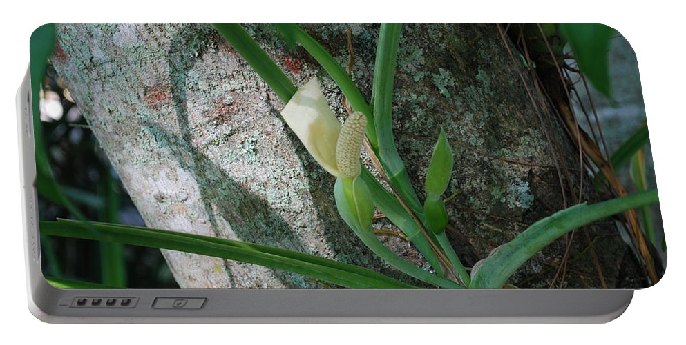 Tree Climber Portable Battery Charger featuring the photograph Philodendron by Robert Floyd