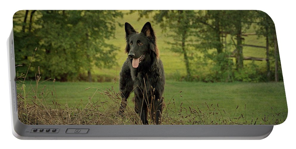 German Shepherd Portable Battery Charger featuring the photograph Phoenix - Early Evening by Sandy Keeton