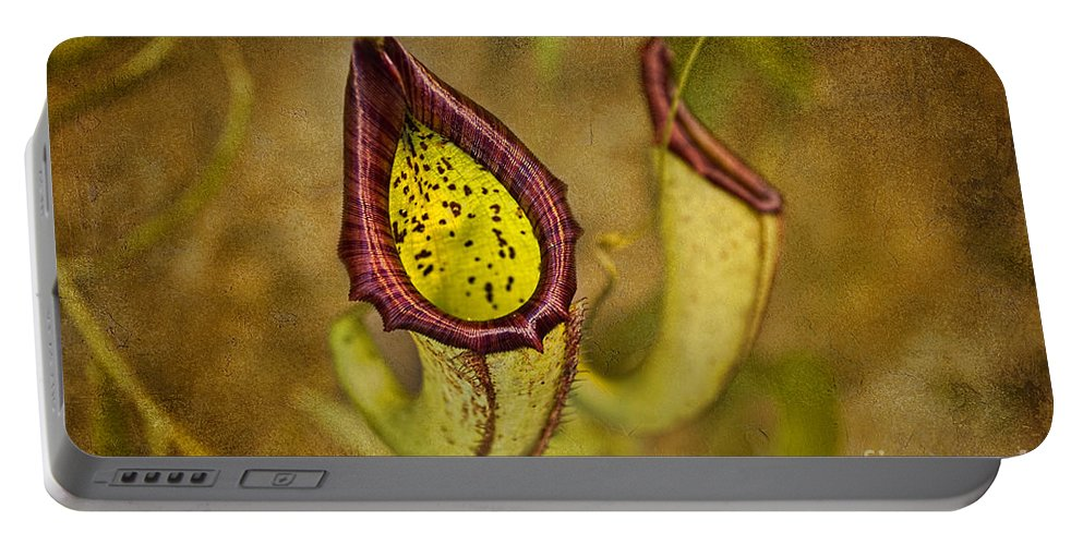 Carnivorous Plants Portable Battery Charger featuring the photograph Picture Plant by David Arment