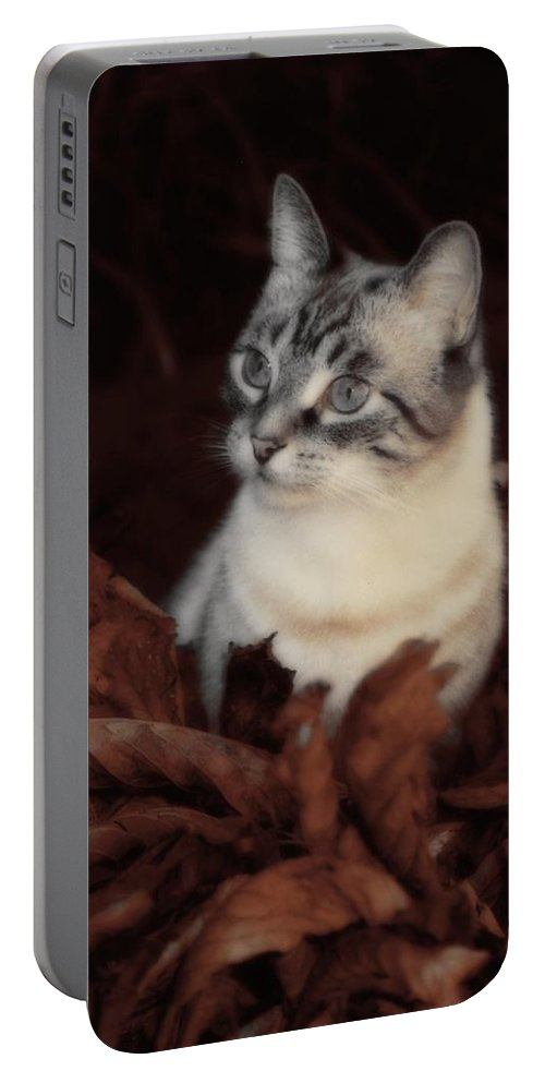 Autumn Portable Battery Charger featuring the photograph Rustic Pile Of Leaves And Cat by Gothicrow Images