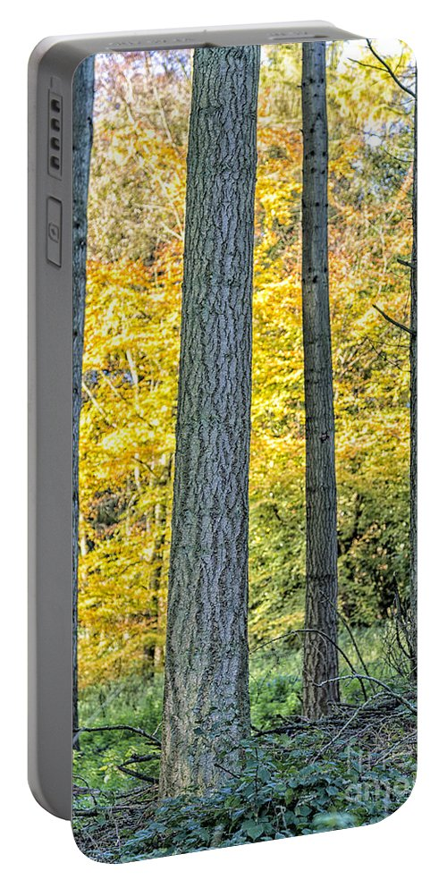 Forest Portable Battery Charger featuring the photograph Pine Forest In The Autumn by Julian Eales