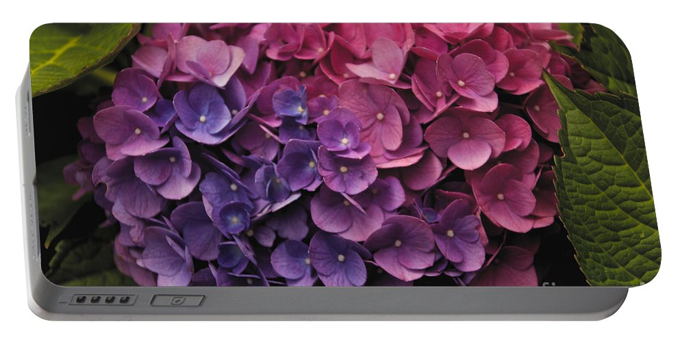 Flower Portable Battery Charger featuring the photograph Pink And Blue Hydrangea by William Norton