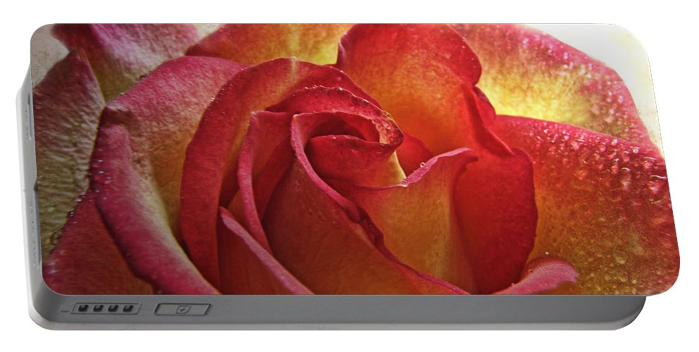 Dew Portable Battery Charger featuring the photograph Pink And Yellow Rose With Water Drops by Debbie Portwood