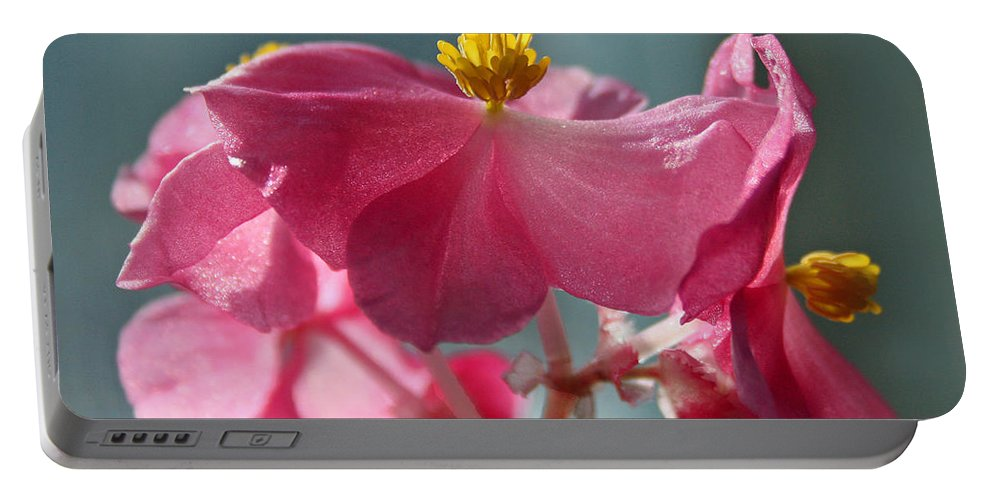 Pink Portable Battery Charger featuring the photograph Pink Begonia Flower Portrait by Karen Adams
