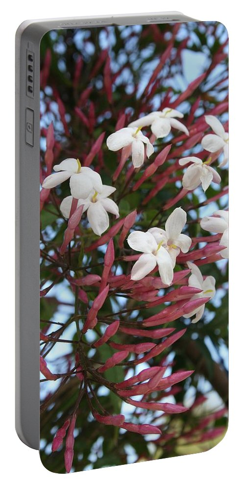 White Portable Battery Charger featuring the photograph Pink Buds And Jasmine Blossom Close Up by Taiche Acrylic Art