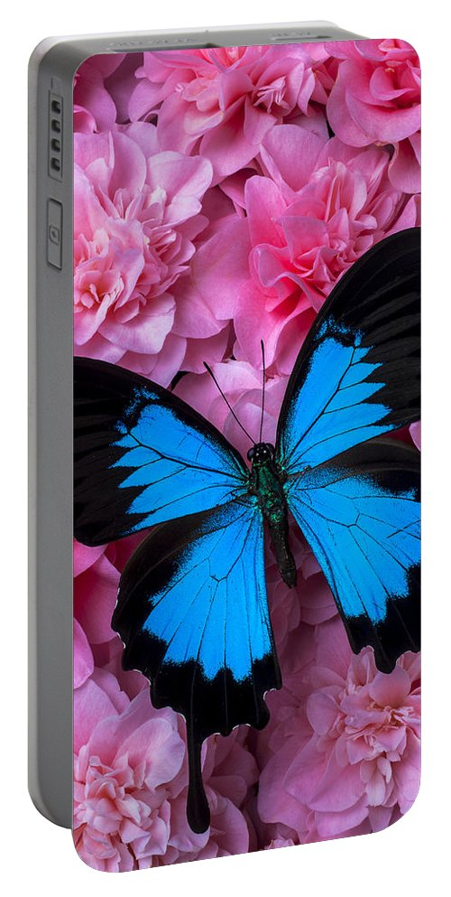 Pink Camilla's Cultivation Portable Battery Charger featuring the photograph Pink Camilla And Blue Butterfly by Garry Gay