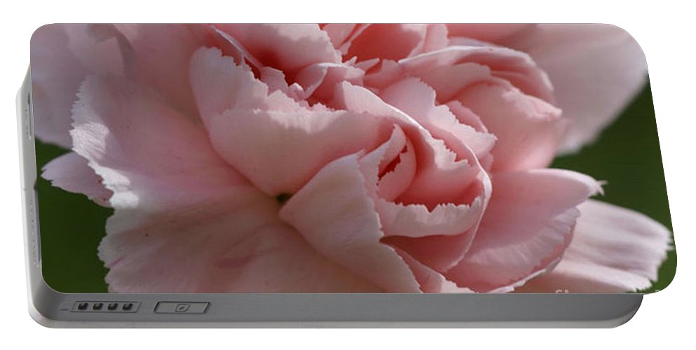 Pink Portable Battery Charger featuring the photograph Pink Carnation by Carol Lynch