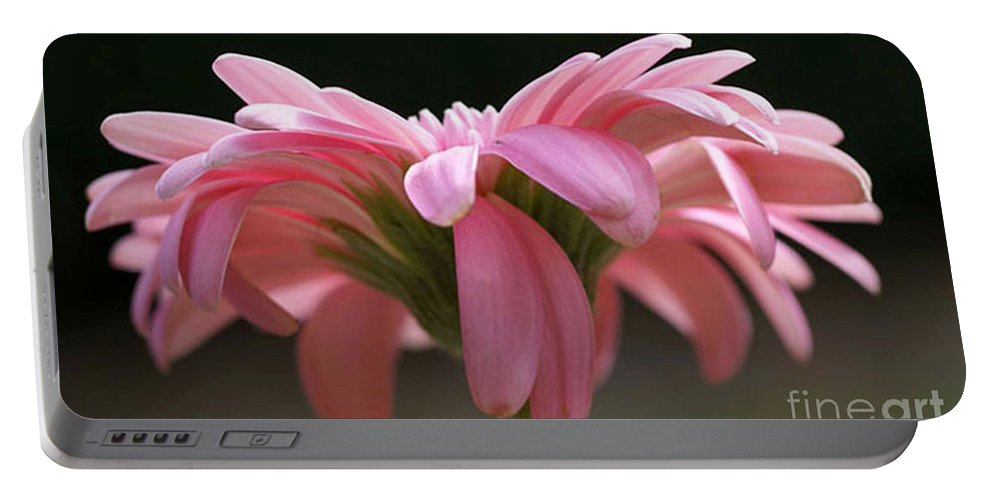 Pink Portable Battery Charger featuring the photograph Pink Daisy 1 by Carol Lynch