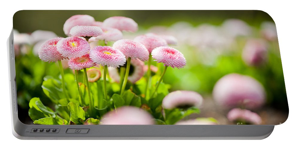 Abloom Portable Battery Charger featuring the photograph Bellis Perennis Pomponette Called Daisy Blooming by Arletta Cwalina