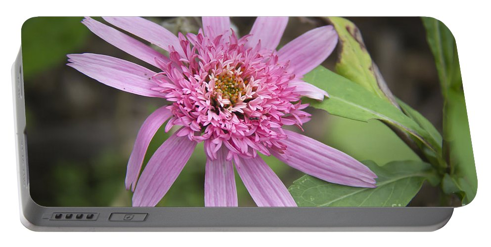 Pink Portable Battery Charger featuring the photograph Pink Double Delight Echinacea by Teresa Mucha