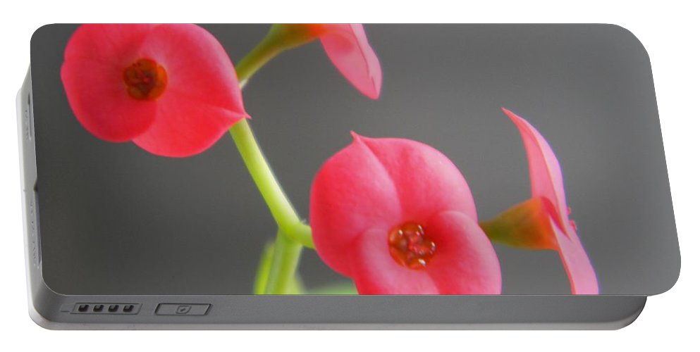 Pink Portable Battery Charger featuring the photograph Pink Flowers by Owl's View Studio