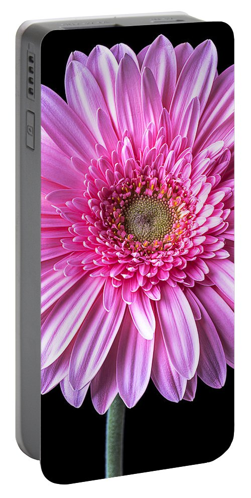 Pink Gerbera Daisy Portable Battery Charger featuring the photograph Pink Gerbera Daisy Close Up by Garry Gay