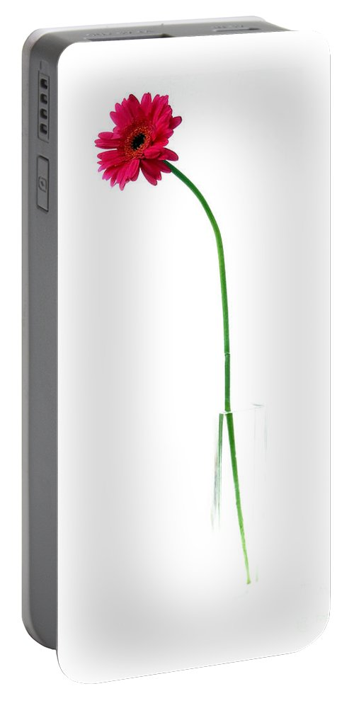 Gerbera Portable Battery Charger featuring the photograph Pink Gerbera by Nina Ficur Feenan
