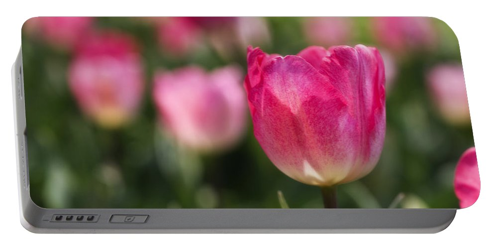 Tulip Portable Battery Charger featuring the photograph Pink Glowing Tulip by Shelly Gunderson