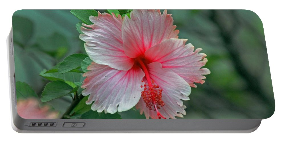 Pink Hibiscus Portable Battery Charger featuring the photograph Pink Hibiscus by Tony Murtagh