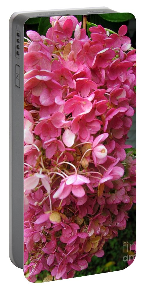 Hydrangea Portable Battery Charger featuring the photograph Pink Hydrangea by Elizabeth Dow