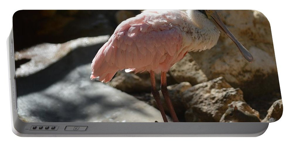 Bird Portable Battery Charger featuring the photograph Pink Is Pretty by Linda Kerkau