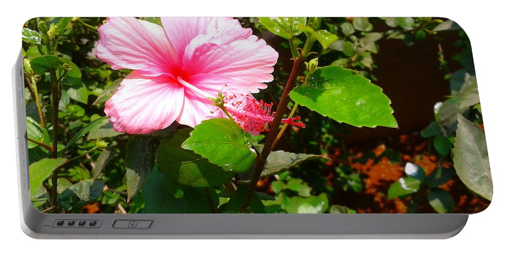 Acrylic Portable Battery Charger featuring the photograph Pink Java Flower by Artist Nandika Dutt