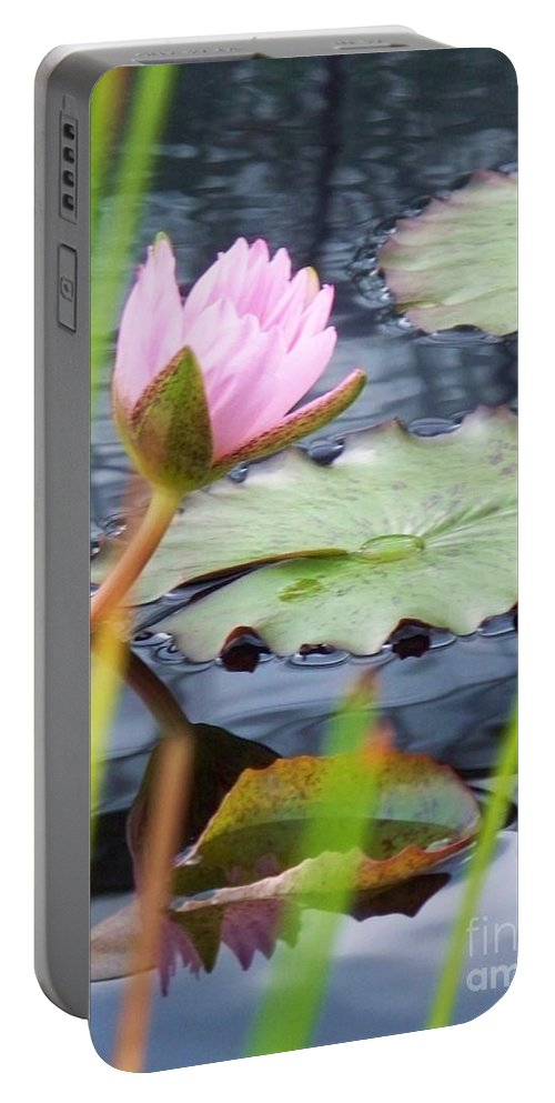 Photograph Portable Battery Charger featuring the photograph Pink Lily And Pads by Eric Schiabor
