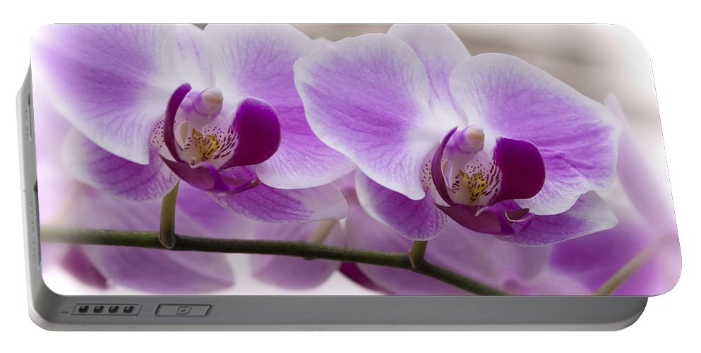 Pink Orchid Portable Battery Charger featuring the photograph Pink Orchid by Saija Lehtonen