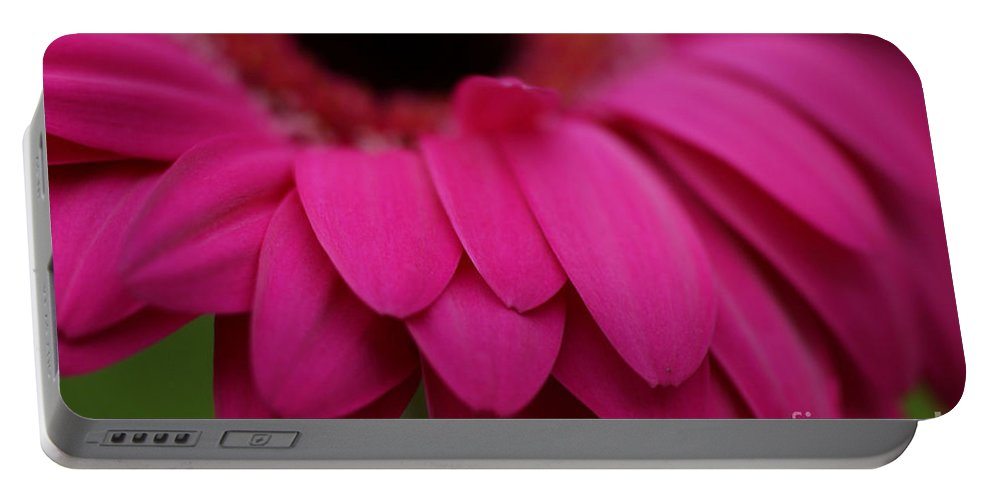 Pink Portable Battery Charger featuring the photograph Pink Petals by Carol Lynch
