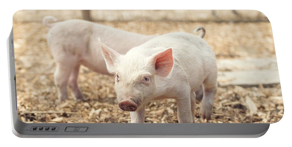 Pig Portable Battery Charger featuring the photograph Pink Piglet by Stephanie McDowell