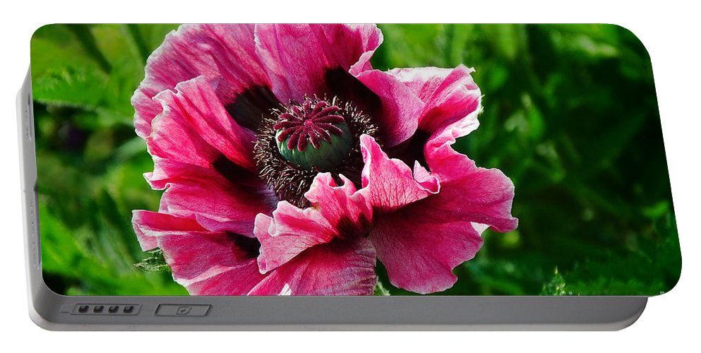 Poppy Portable Battery Charger featuring the photograph Pink Poppy by Susie Peek
