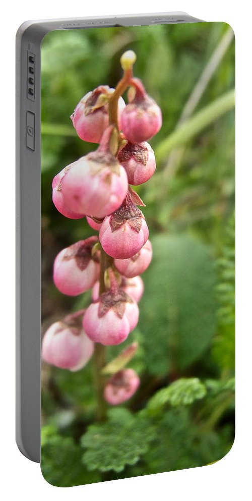 Pink Pyrola On Alpine Tundra Trail By Eielson Visitor's Center Portable Battery Charger featuring the photograph Pink Pyrola On Alpine Tundra Trail By Eielsen Visitor's Center In Denali Np-ak by Ruth Hager
