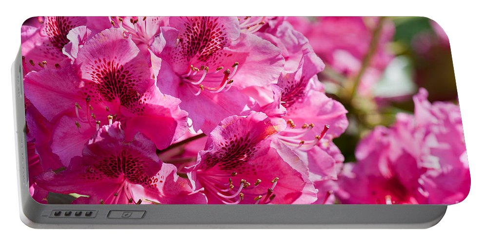 Abloom Portable Battery Charger featuring the photograph Rhododendron Called Azalea Bright Pink Flowers by Arletta Cwalina