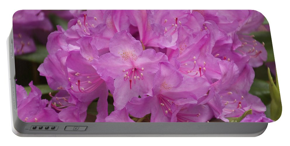 Rhododendron Portable Battery Charger featuring the photograph Pink Rhododendron by William Norton