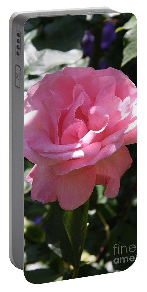 Rose Portable Battery Charger featuring the photograph Pink Rose by Christiane Schulze Art And Photography