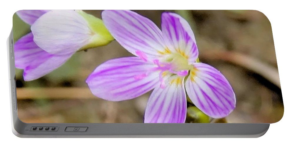 Spring Beauty Portable Battery Charger featuring the photograph Pink Spring Beauty by Eric Noa