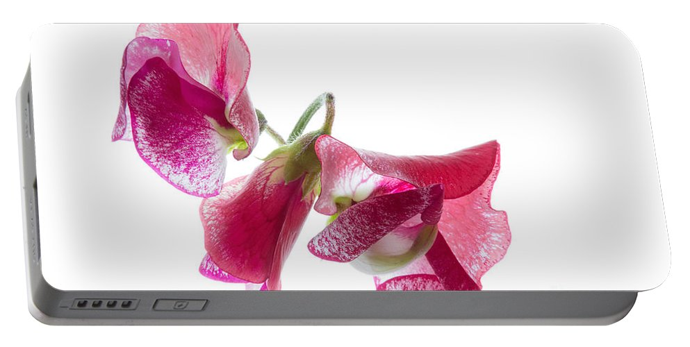 Sweet Pea Portable Battery Charger featuring the photograph Pink Sweet Pea 2 by Ann Garrett