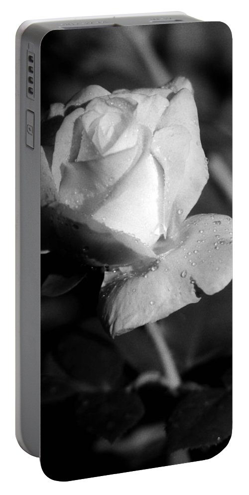 Rose Portable Battery Charger featuring the photograph Pink Tea Rose 01 - Infrared by Pamela Critchlow