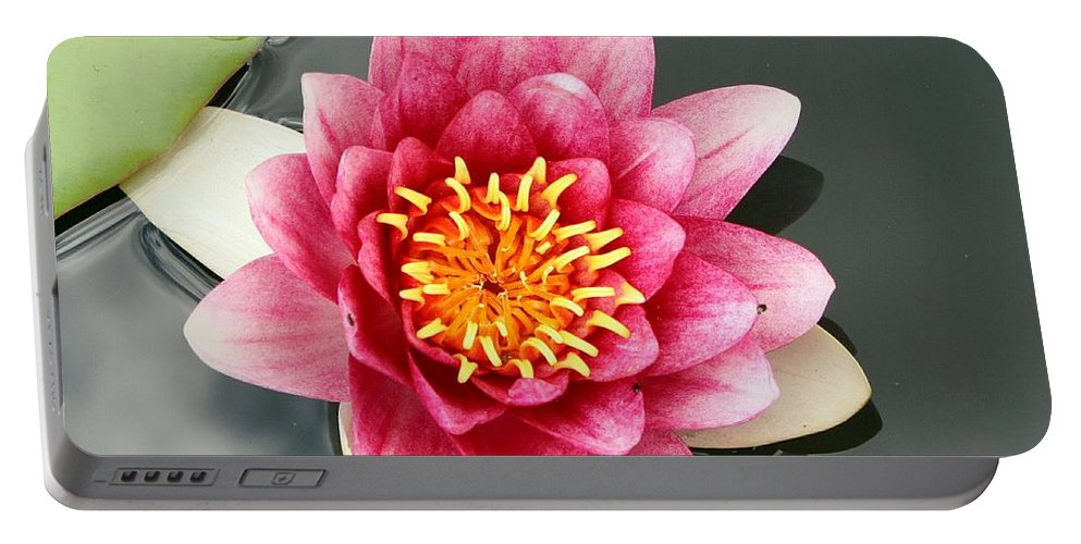 Waterlily Portable Battery Charger featuring the photograph Pink Waterlily And Cloud Reflection by Christiane Schulze Art And Photography