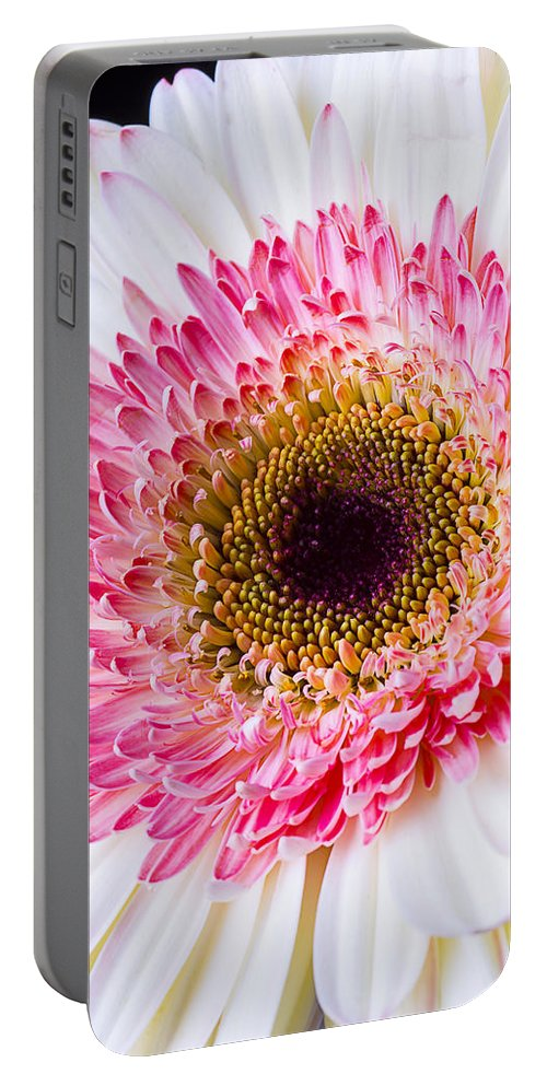 Pink Gerbera Daisy Portable Battery Charger featuring the photograph Pink White Daisy by Garry Gay