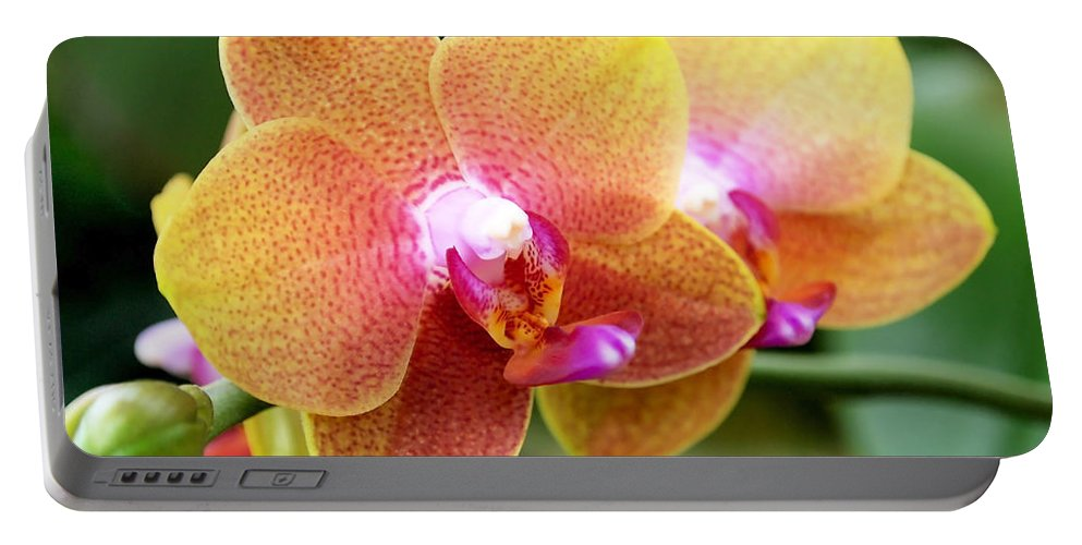 Orchid Portable Battery Charger featuring the photograph Pink Yellow Orchid by Rona Black
