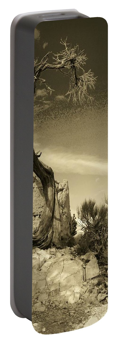 Tree Portable Battery Charger featuring the photograph Pinon Pine by John Schneider