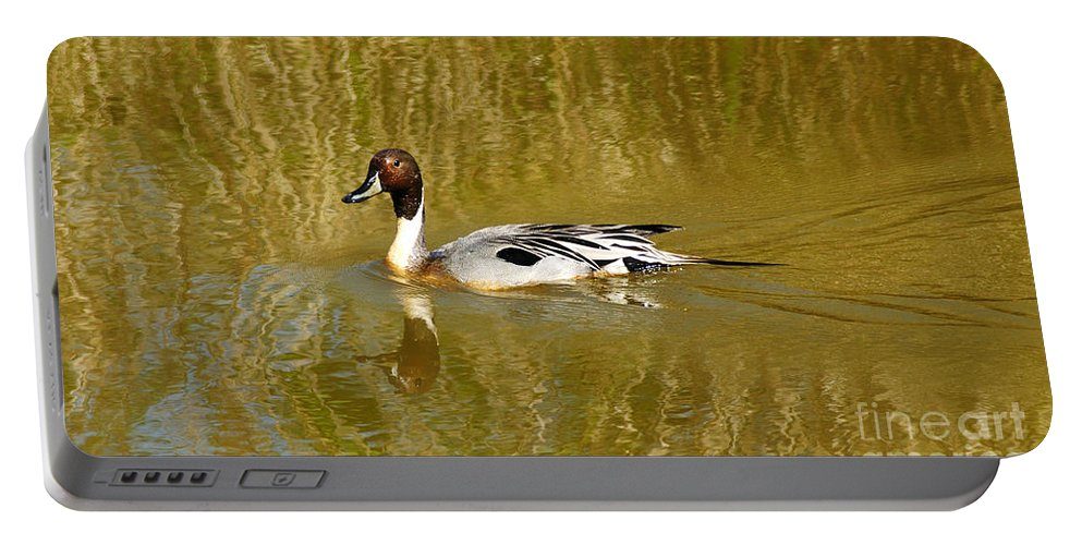 Pintail Duck Portable Battery Charger featuring the photograph Pintail Duck by Vivian Christopher