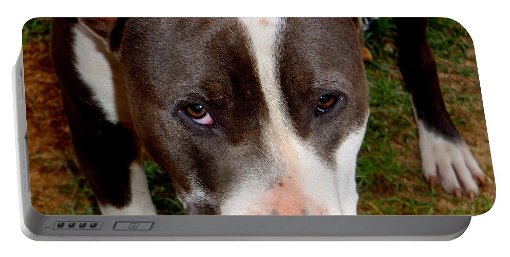 Brown Portable Battery Charger featuring the photograph Pit Bull - 2 by Mary Deal