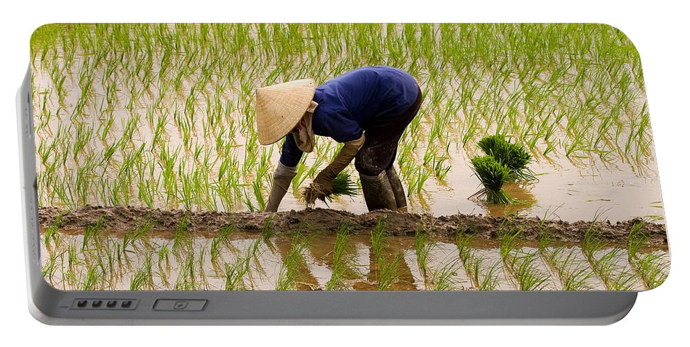 Planting Rice Portable Battery Charger featuring the photograph Planting Rice by J L Woody Wooden