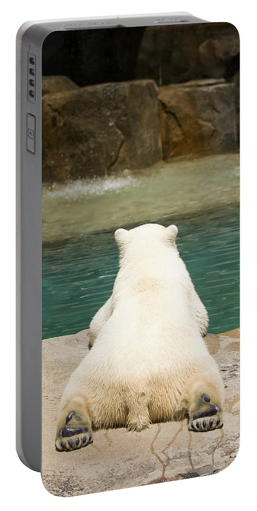 3scape Photos Portable Battery Charger featuring the photograph Playful Polar Bear by Adam Romanowicz