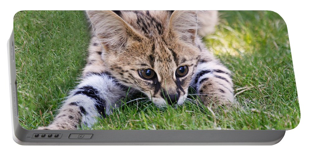 Serval Portable Battery Charger featuring the photograph Playful Serval by Athena Mckinzie