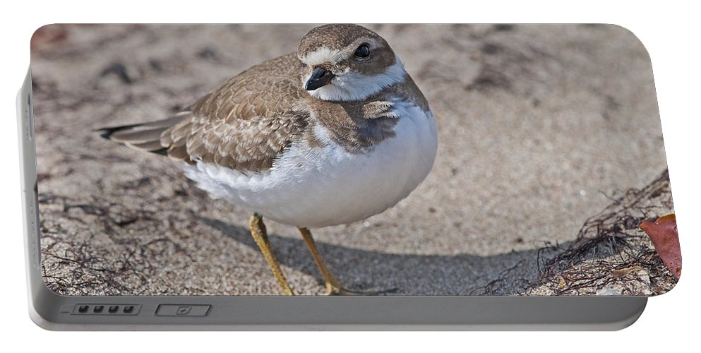 Festblues Portable Battery Charger featuring the photograph Plover Lover.. by Nina Stavlund