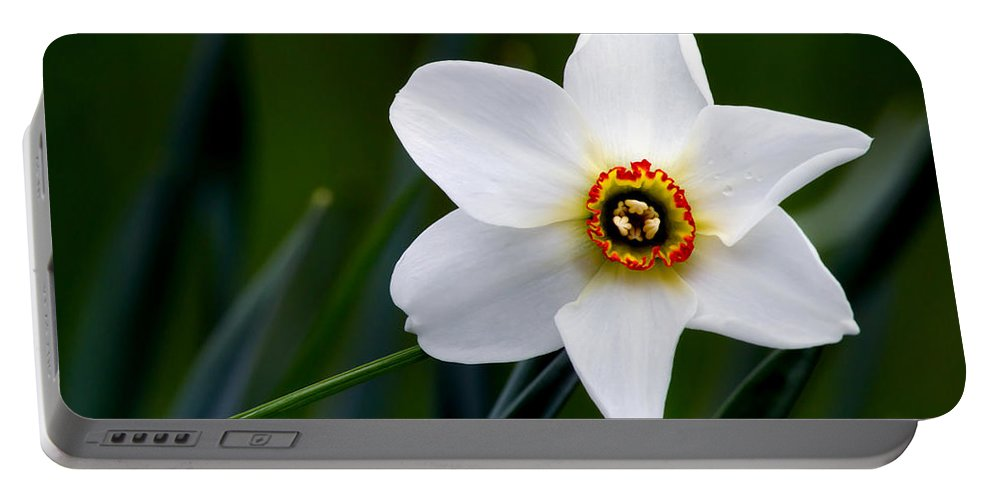 Poet's Daffodil Portable Battery Charger featuring the photograph Poet's Daffodil by Torbjorn Swenelius
