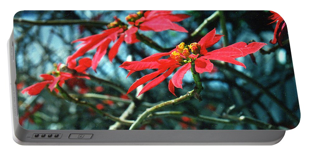 Poinsettia Portable Battery Charger featuring the photograph Poinsettia Africa by Jerome Stumphauzer