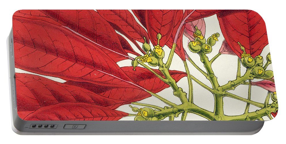 Rosea-carminata Portable Battery Charger featuring the painting Poinsettia Pulcherrima by WG Smith