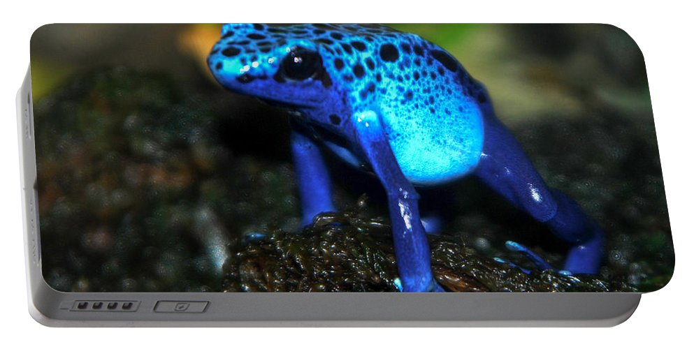Blue Frog Portable Battery Charger featuring the photograph Poison Blue Dart Frog by Optical Playground By MP Ray