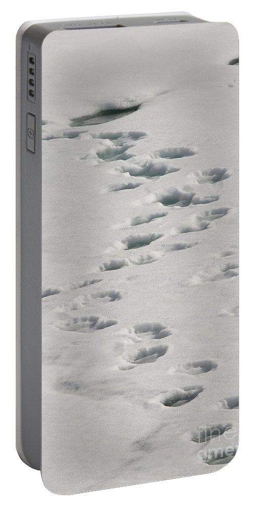 Arctic Portable Battery Charger featuring the photograph Polar Bear Footprints by John Shaw